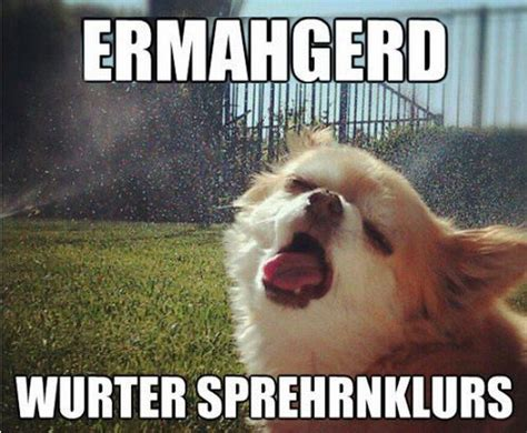 Ermahgerd Animal Memes - happy summer meme monday trish marie dawson