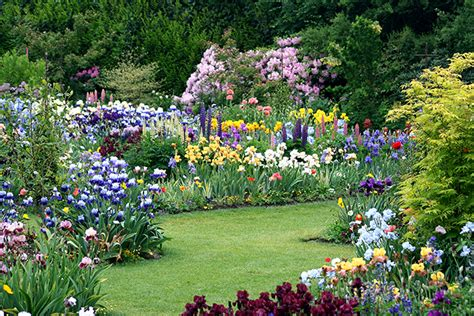 Iris Flower Garden How To Grow Magnificient Irises