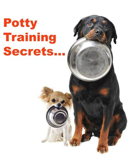rottweiler puppy potty 1000 images about rottweiler images on pets puppys and rottweilers