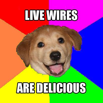 Internet Dog Meme - web memes and me storied bits