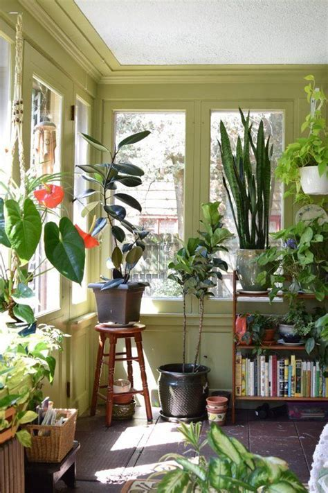 plants for decorating home best 25 green walls ideas on green paint