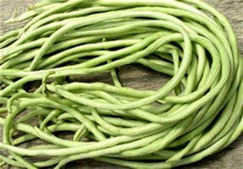 Benih Kacang Panjang Yang Baik kumpulan budidaya budidaya kacang panjang