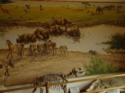 ashfall fossil beds ashfall fossil beds state historical park royal ne address phone number top