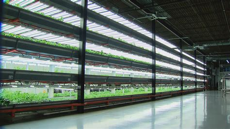 Indoor Planting by West Humboldt Park Farm Raises Fresh Fish Greens In Once