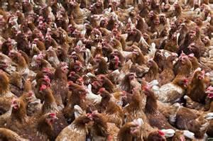black friday tv specials drive in dienst door kippen in kerk binnenland telegraaf nl