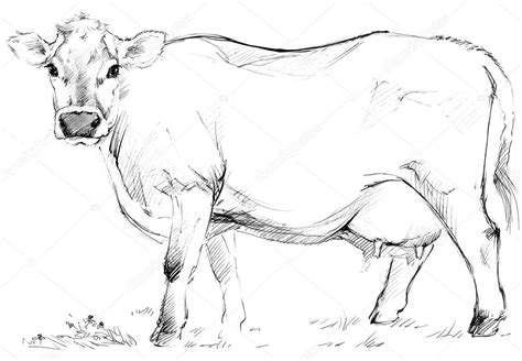 imagenes de vacas a lapiz cow cow sketch dairy cow pencil sketch animal farm