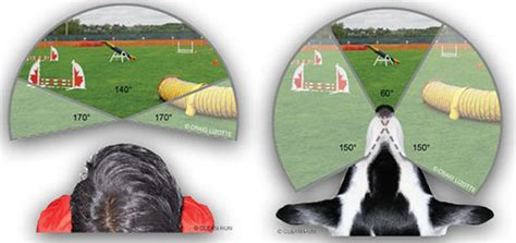 cats color vision how dogs see the world