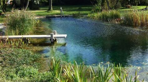 backyard swimming ponds all about natural swimming pools green home guide ecohome