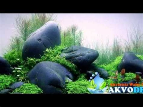 desain aquarium air tawar jual aquascape air tawar youtube