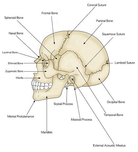 Sections Of The Anatomy by 2144 Best I M Simply Sayin Images On Words