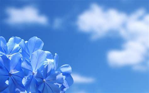 imagenes de paisajes azules paisaje con flores azules hd fondoswiki com