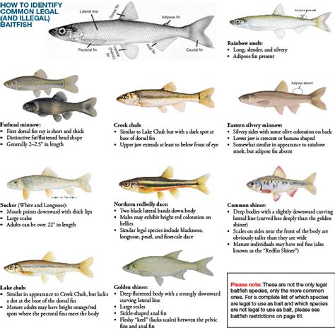 saltwater boat fishing license va 2016 2017 michigan fishing guide autos post