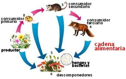 cadena alimenticia jirafa cadena alimenticia ciencias naturales by