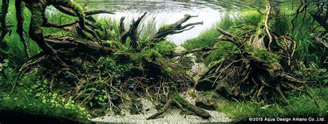 stunning aquarium  winners