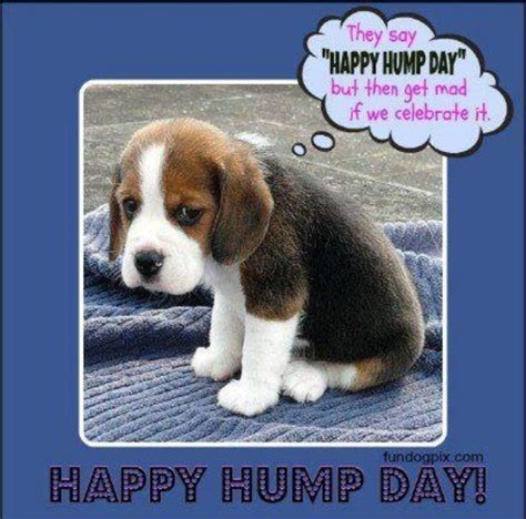 Funny Hump Day Memes - 1000 ideas about funny hump day memes on pinterest