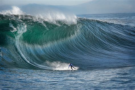 surf s hawaii surfing dangerous waves animal photo