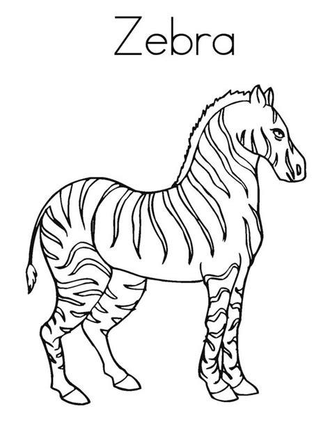 blank zebra coloring page zebra print outline coloring page size coloring pages