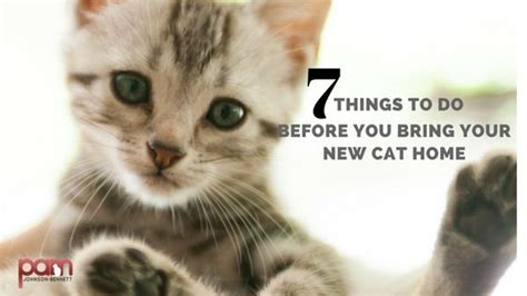 7 Things To Bring Cing by New Cats Seven Things To Do Before Bringing Your Cat Home