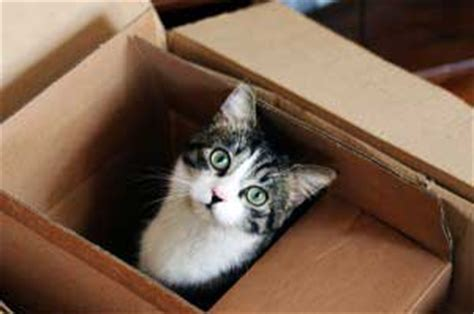 transitioning your tabby to a new home ask the experts