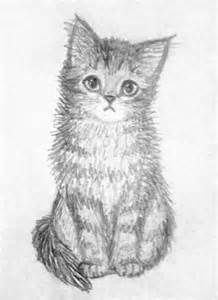 19 cat drawings art ideas sketches design trends