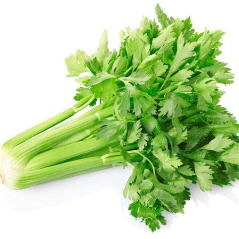 sedano verde ricette sedano verde
