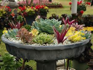 succulents container gardens world of succulents