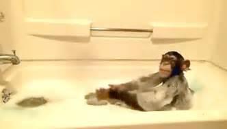 monkeys baths gif by cheezburger find on giphy