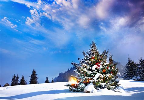 christmas tree winter landscape snow winter snow christmas
