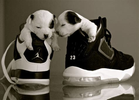jordans for dogs i dogs 7 a gallery on flickr