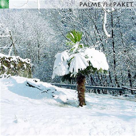 Bilder Palmenarten 3997 by Bilder Palmenarten Bilder Zimmerpalmen