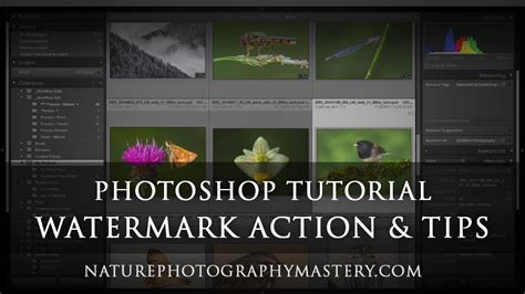 adobe photoshop watermark tutorial watermark tips and photoshop action tutorial nature
