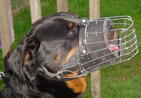 rottweiler cage size rottweiler wire muzzle cage muzzle for rottweiler m4 1063 rottweiler wire