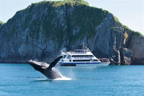 kenai boat tours major marine kenai fjords cruise wildlife cruise from seward