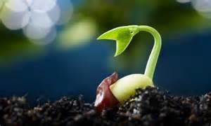 Cool Food Gadgets plant kingdom