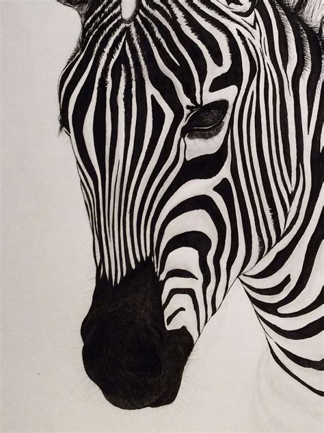 Zebra Penciltic Fineliner 0 4 zebra facedrawn using a fineliner pengreat quality