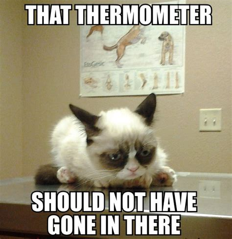 Grumpy Cat Funniest Memes - 32 that thermometer the 50 funniest grumpy cat memes
