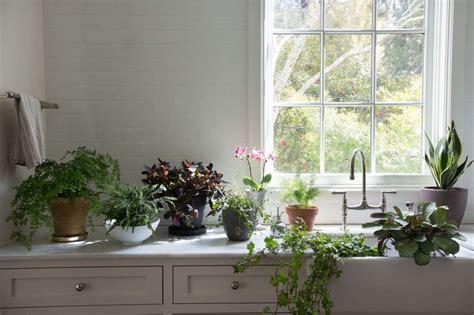 houseplants  indoor plants   light gardenista