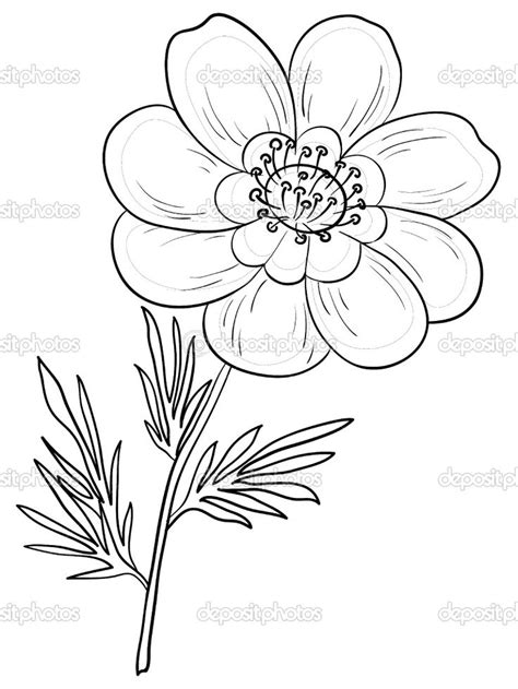 Outline Sketches Of Flowers by 291 Best Images About Flower Tattoos On Flower Clipart Pansy And Peonies