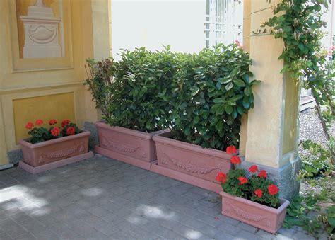 piante da vaso per esterni pianta da siepe in vaso come si mette a dimora e quali