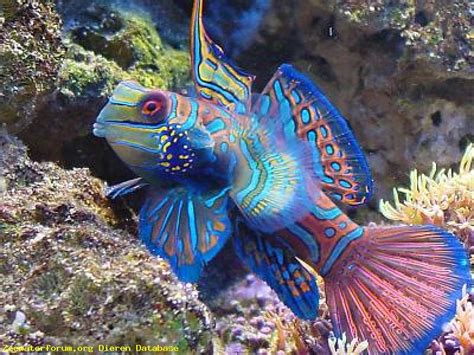 reparatie jumbo nl kachels slakken eieren aquarium msnoel