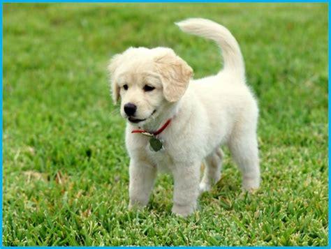 imagenes de perritos pin perritos tiernos pictures on pinterest