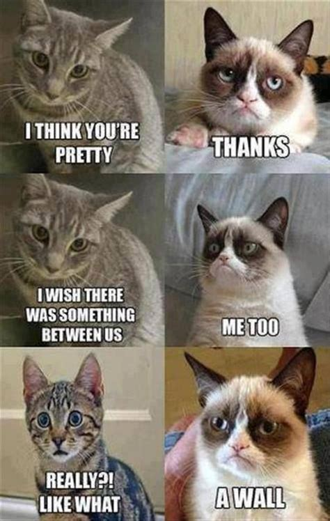 Grumpy Cat Love Meme - 25 best ideas about funny cat pics on pinterest funny