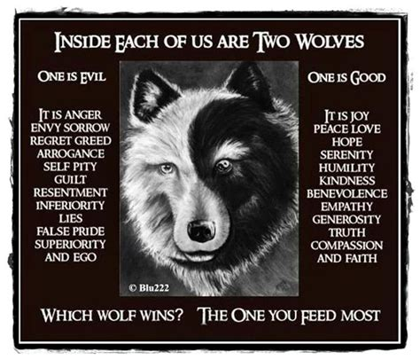 Instan Wolvis wolf2 jpg 720 215 618 which wolf wins the one you feed the