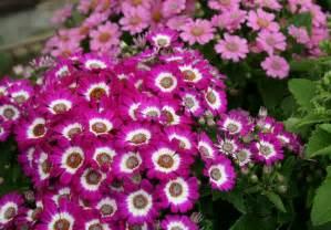 Carlsbad Flower - flowering plants online