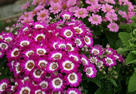 shrubs flowers flowering plants