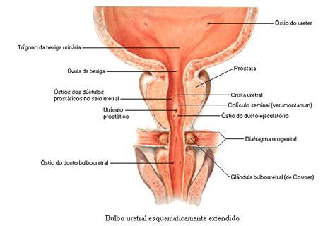 vestibulo feminino embolitzaci 243 arterial prost 224 tica viquip 232 dia l