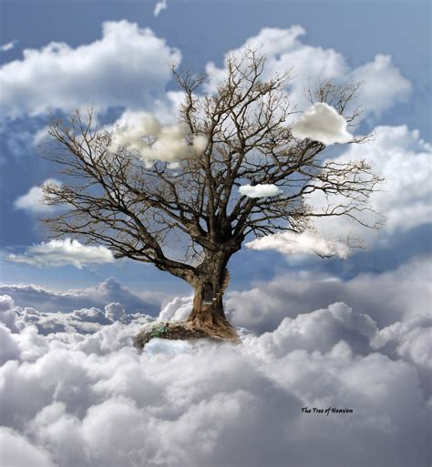 the trees the tree of heaven by egypt04 on deviantart