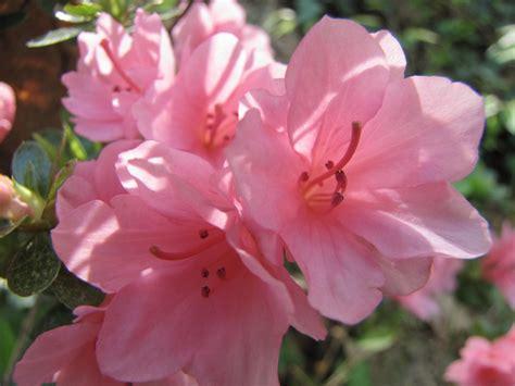pretty plants pretty pink flowers by prettypunkae on deviantart