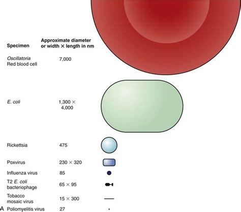 bacteria cross  semi permeable membrane quora