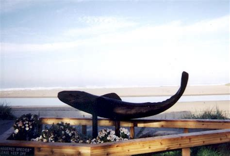 whale park in cannon beach oregon on the lewis and clark